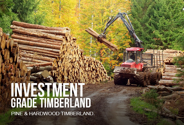 Investment grade timber