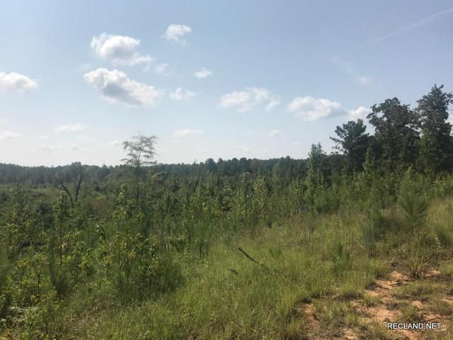 MS - Attala - Cut Over Hunting Tract at Good Price