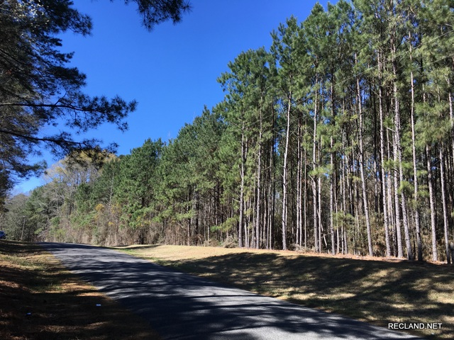 LA - Bienville - Wooded Home Site Tract