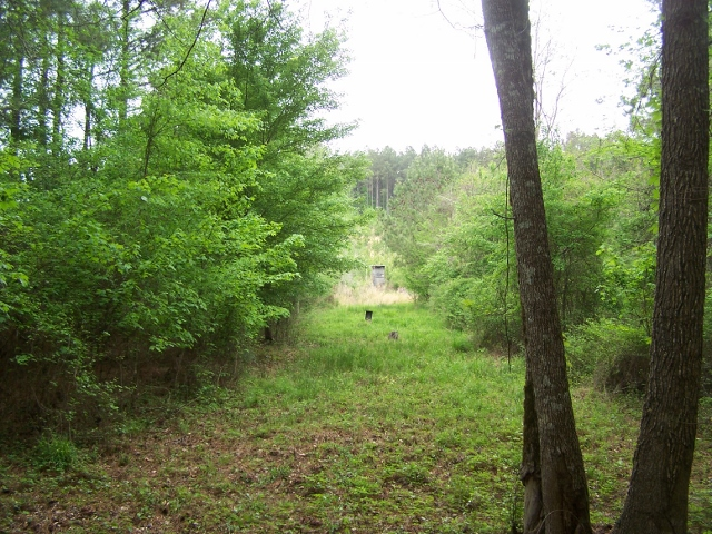 LA - Caldwell - Pine and Hardwood Timberland Investment and Hunting Tract
