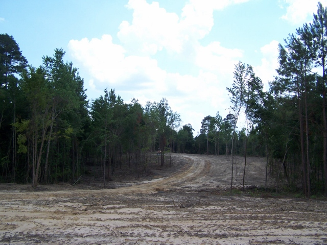 LA - Caldwell - Timberland Tract for Rural Home Site with Hwy Access