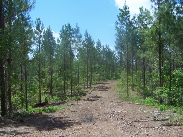 LA - Caldwell - Pine & Hardwood Timberland with Great Hunting & Utilities Available
