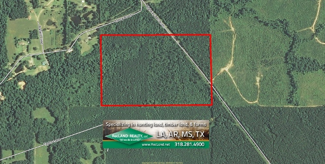 LA - Caldwell - Timberland with Nice Home Site Potential