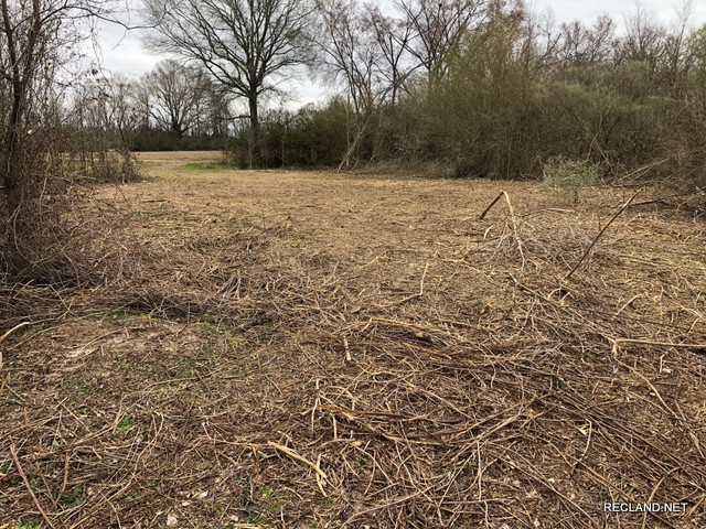 LA - Franklin - Wooded Tract for Rural Home Site in Liddieville Area
